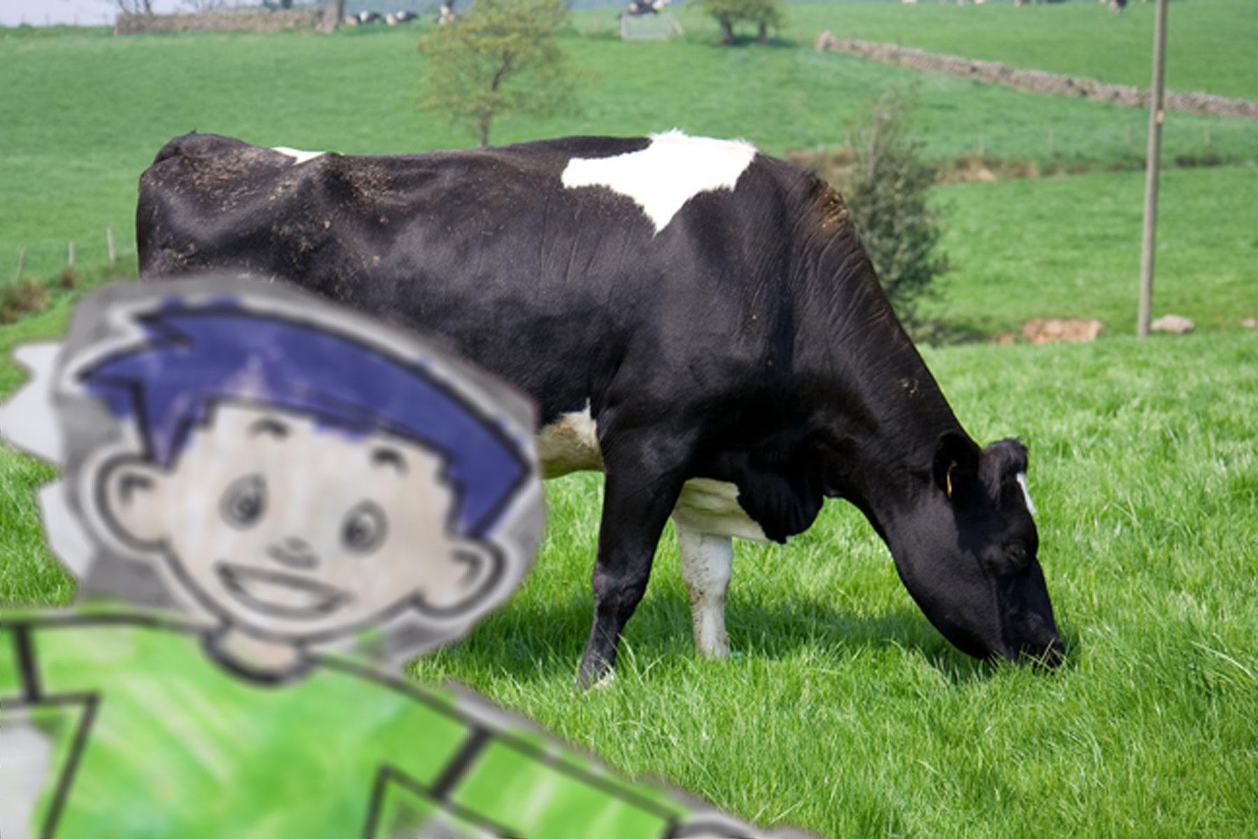 2 cow